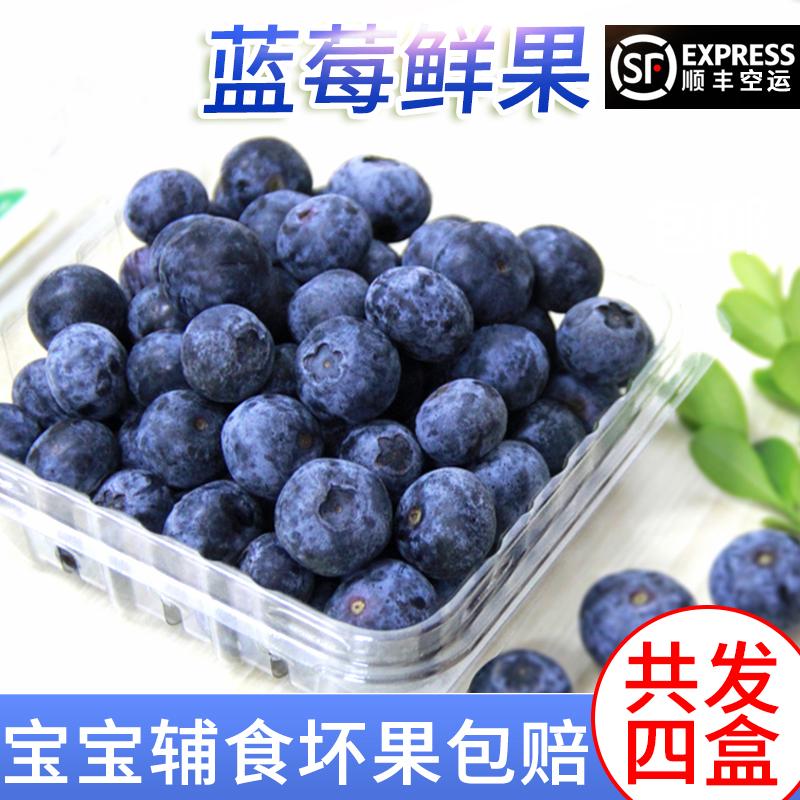 现货新鲜蓝莓4盒蓝莓鲜果国产蓝莓宝宝辅食水果500g空运全国顺丰