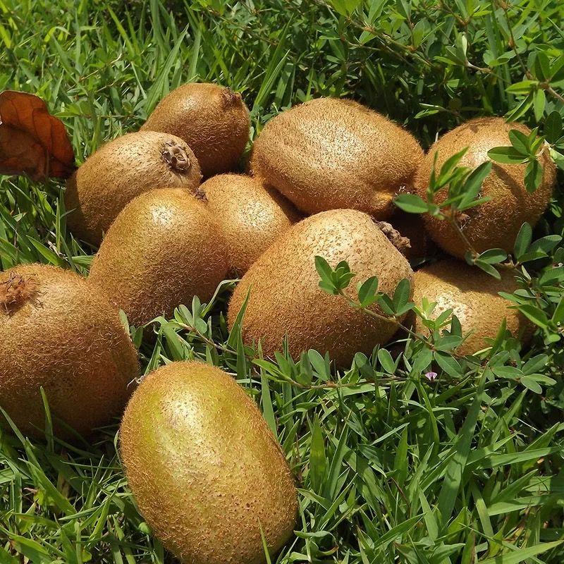 陕西绿心猕猴桃水果奇异果水果新鲜弥核桃多规格非红心黄心