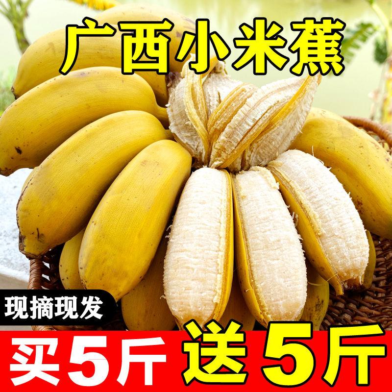 广西小米蕉9斤应季新鲜水果3/5斤小香蕉芭蕉苹果蕉