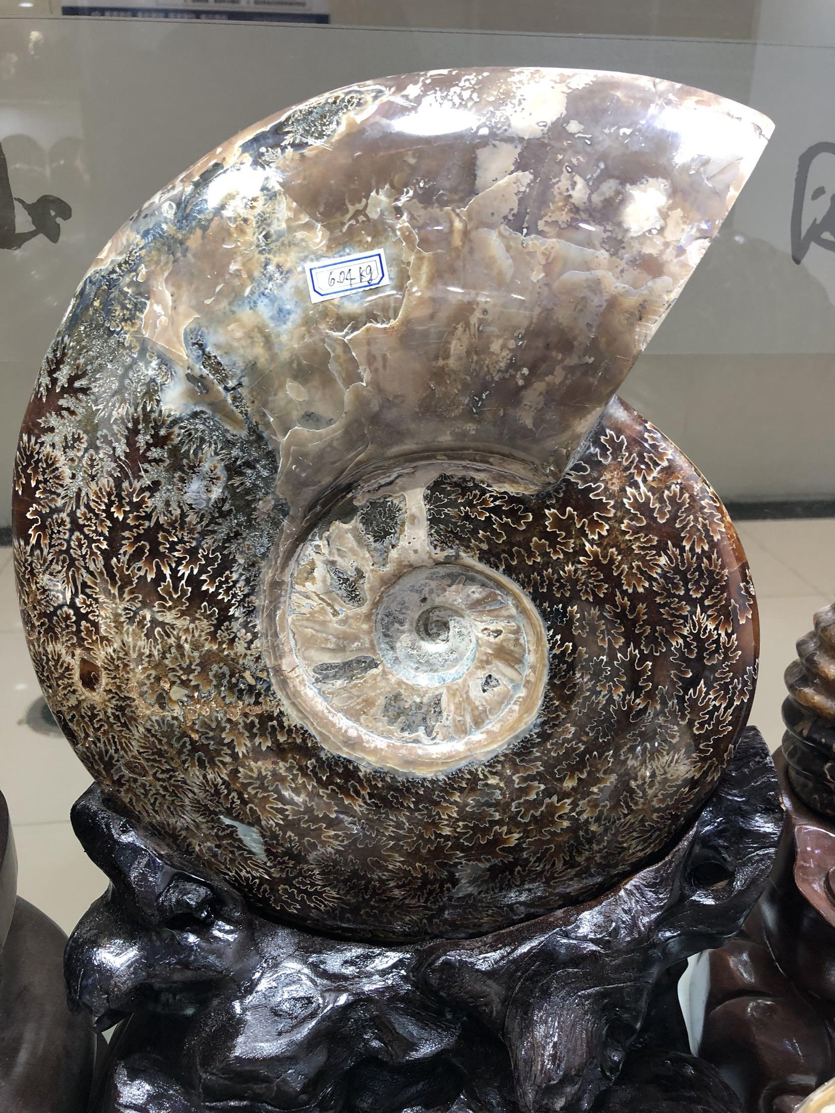 Ископаемые Артикул 603699286659