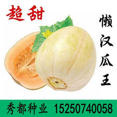 Lazy melon king seed white melon seed resistant to continuous cropping and four seasons sowing