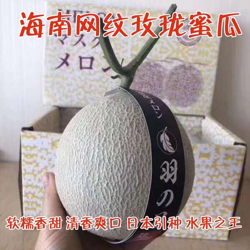 Hainan reticulated melon 5-6 head belt box 14kg Japan introduced yuyuemeilong honeydew melon Hami melon fresh Nine Dragons