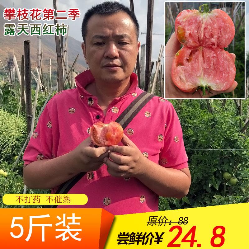 攀枝花大西红柿米易沙瓤番茄新鲜5斤装露天种植自然熟水果蔬菜