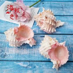 包邮天然海螺贝壳星光玉螺红骨螺工艺品家居收藏寄居蟹房子卷贝鱼
