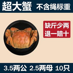 10只超大3.5两公2.5两母螃蟹鲜活大闸蟹全母包邮洪泽湖毛蟹特大
