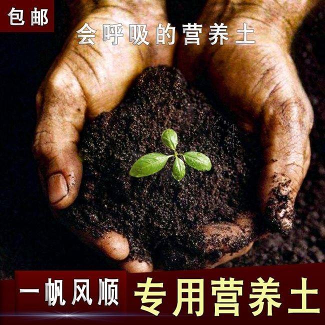 順風満帆専用土栄養土有機肥料白掌植木鉢花泥植物通気性花土壌栽培