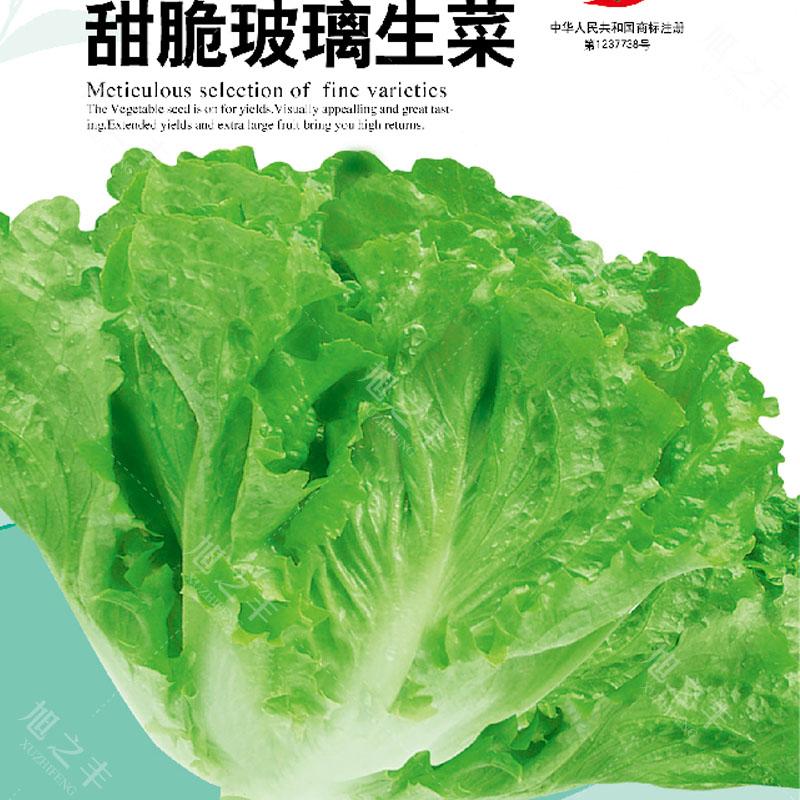玻璃生菜种子脆嫩爽口生吃生菜种籽盆栽四季春季农家蔬菜种孑3.80元包邮