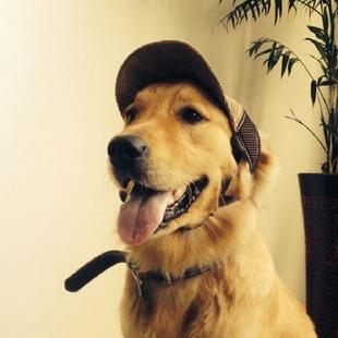 宠物帽子夏季遮阳太阳帽泰迪金毛狗狗棒球帽子宠物用品猫咪帽发饰