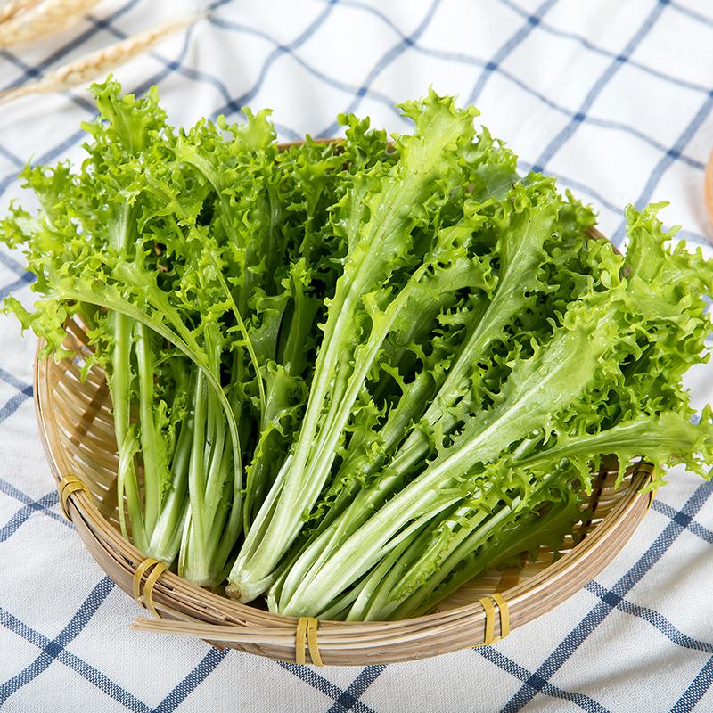 全元素皇帝苦苣宝宝辅食  新鲜苦菊盆栽蔬菜 无农药化肥300g