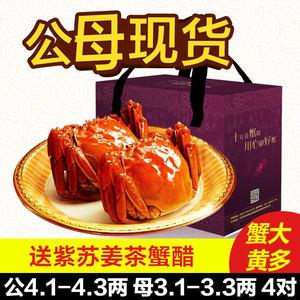 胡农鲜活阳澄湖大闸蟹现货 公4.1-4.3两4只 母3.1-3.3两4只