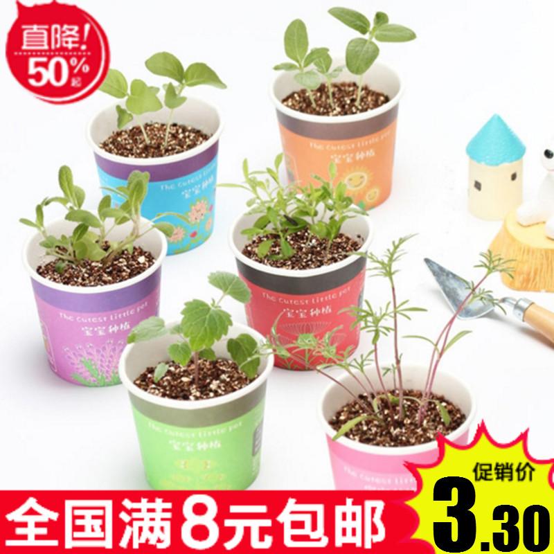 创意微景观迷你可爱盆栽办公室桌面小盆景生态果蔬植物种子盆栽