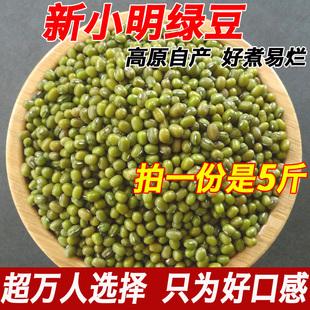 小明绿豆5斤当季新绿豆坝上农家自种绿豆绿豆汤绿豆沙易煮活绿豆