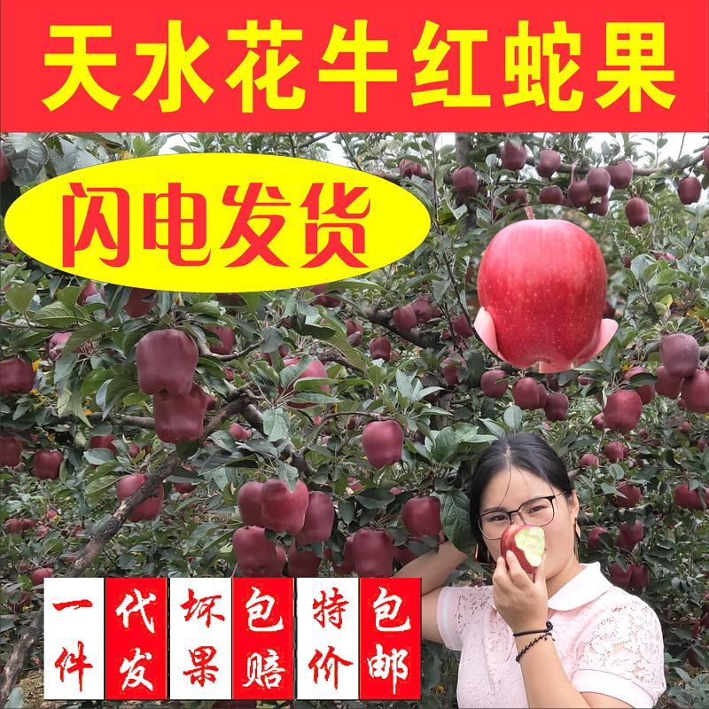 甘肅天水花牛蘋果水果現摘現發新鮮紅蛇果富士刮泥粉蘋果現貨10斤