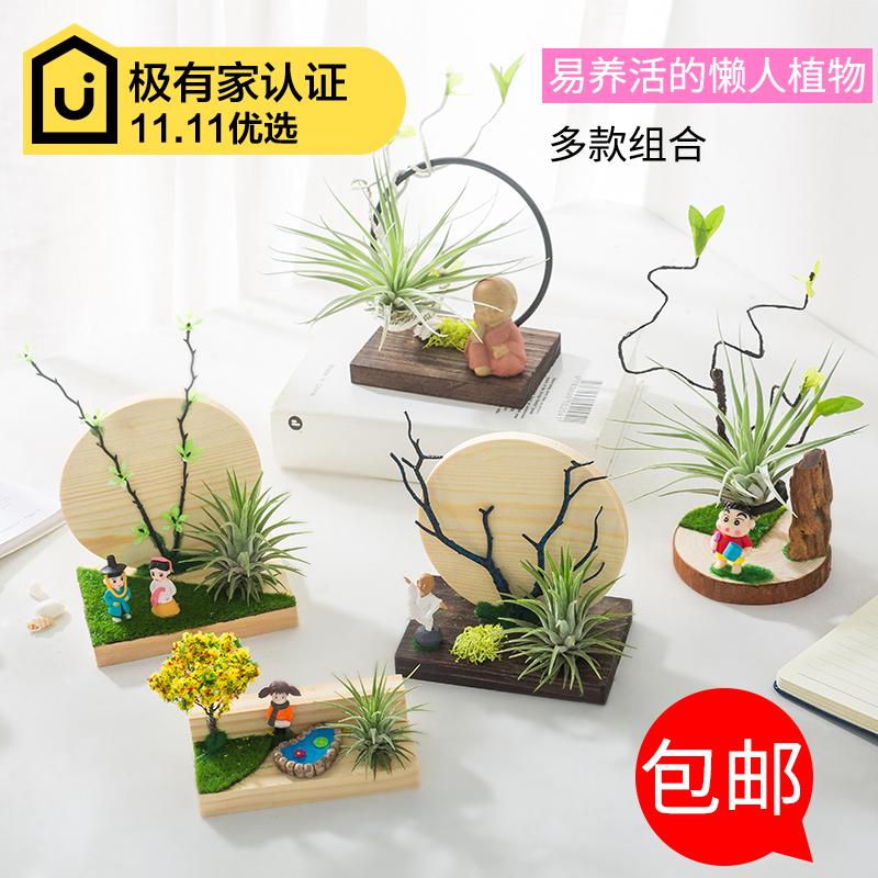 Горшки с растениями Артикул 571146766338