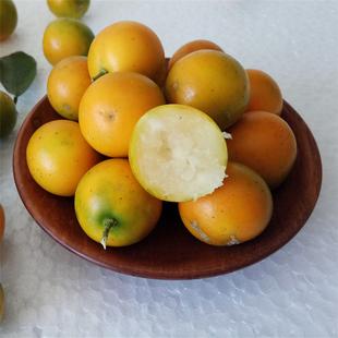 年后发货阳朔脆皮金桔5斤大果青皮滑皮小橘子金桔子新鲜水果包邮