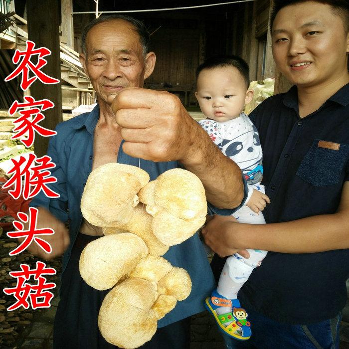 农家高山猴头菇干货 菌类仿野生种植猴菇菌养胃250g包邮 可打粉