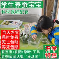 查看蚕宝宝活体彩色卵春蚕大小幼虫活物套装学生儿童新鲜桑叶配件包邮价格