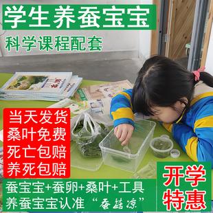 蚕宝宝活体彩色卵春蚕大小幼虫活物套装学生儿童新鲜桑叶配件包邮