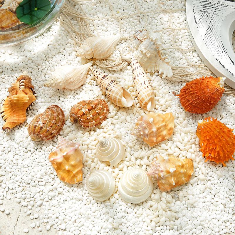 天然海螺贝壳珊瑚沙水族箱鱼缸造景装饰套装地中海工艺品创意摆件