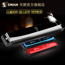 Swan Harmonica Beginner Senior Adult children 24 hole Professional polyphonic C tone piano Primer self-taught musical instruments