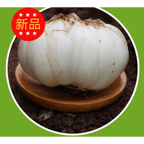 兰州土特产 新鲜甜食食用百合 食用农产品5斤包邮永宁坊特卖