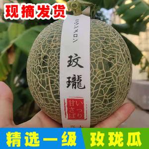 精品玫珑瓜 新鲜现摘日本引种水果口口蜜网纹蜜瓜冰激凌哈密瓜2个