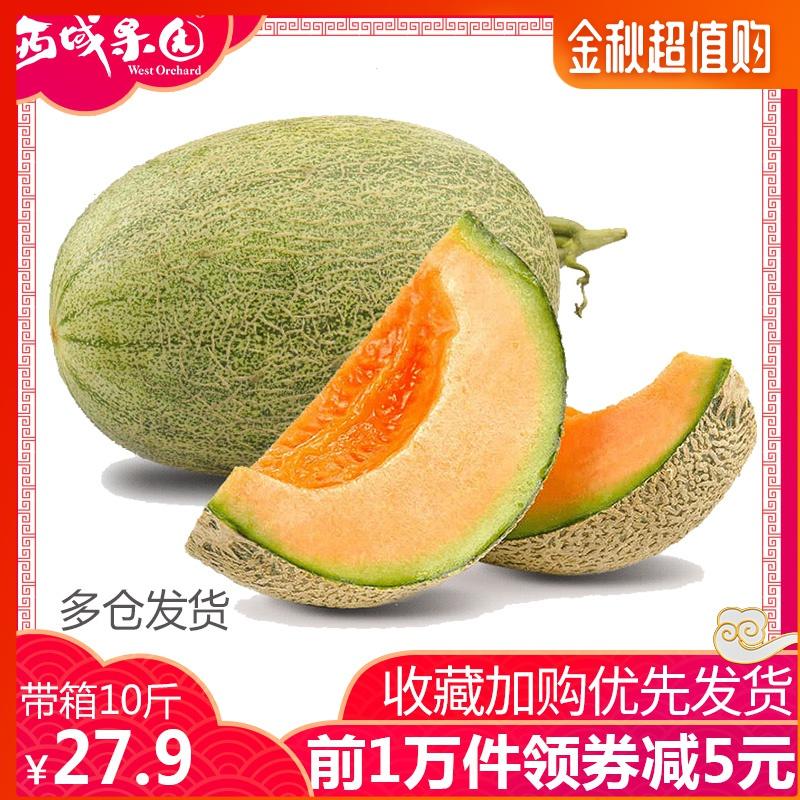 新疆哈密瓜新鲜一箱10斤左右甜瓜11-29新券