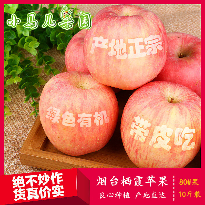 [xiaomaer orchard] Qixia Apple Red Fuji fresh fruit of Yantai, Shandong Province