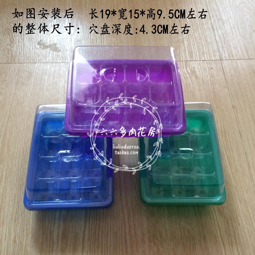 Шесть шесть больше мясо -【12 отверстие воспитывать рассада коробка / воспитывать рассада бассейн / коробка / блюдо 】 цветы больше мясо семена специальный 3 цвет случайный