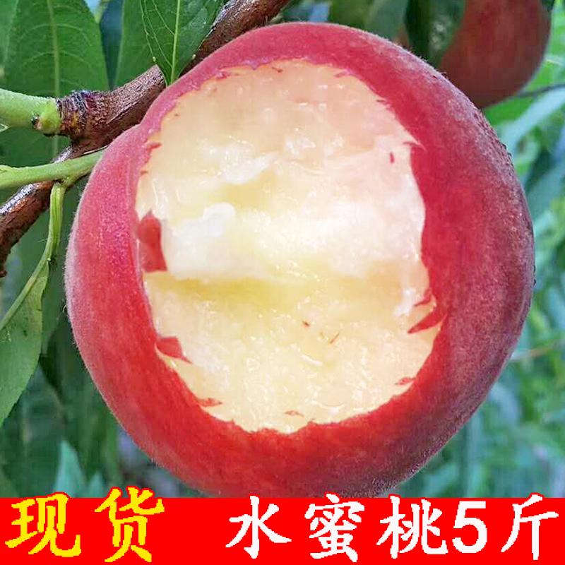 现货水蜜桃5斤 砀山桃子新鲜孕妇水果当季包邮脆桃毛桃非黄桃油桃