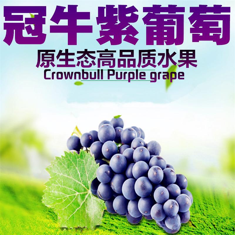 冠牛高品质紫葡萄瓜果水果新鲜黑加仑夏黑葡萄低脂零食3斤装包邮