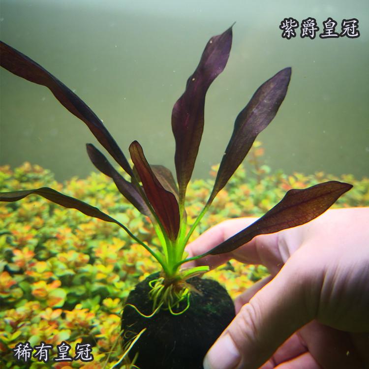 Наполнение для аквариума Артикул 567719187427
