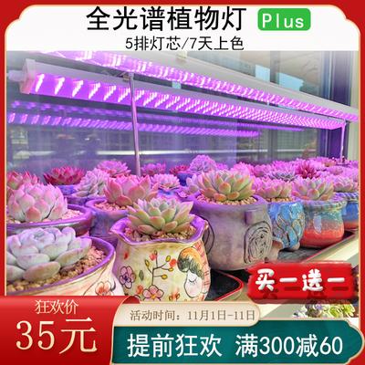 中亚多肉补光灯上色全光谱 led植物灯生长灯家用室内防徒仿太阳光