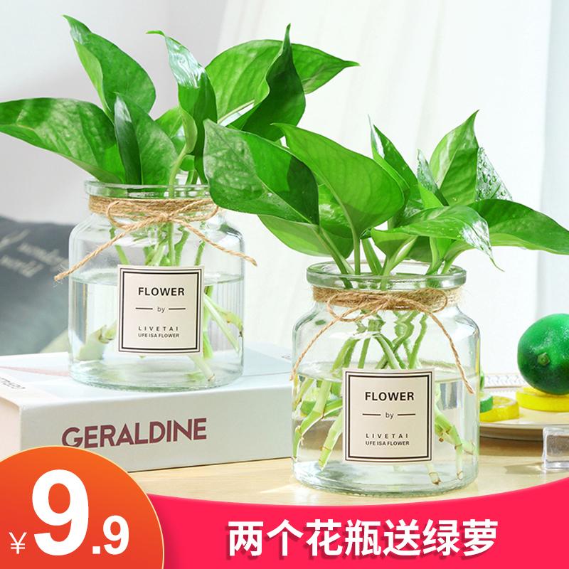 【两件套】加厚北欧ins风玻璃花瓶透明水培植物绿萝创意简约花器