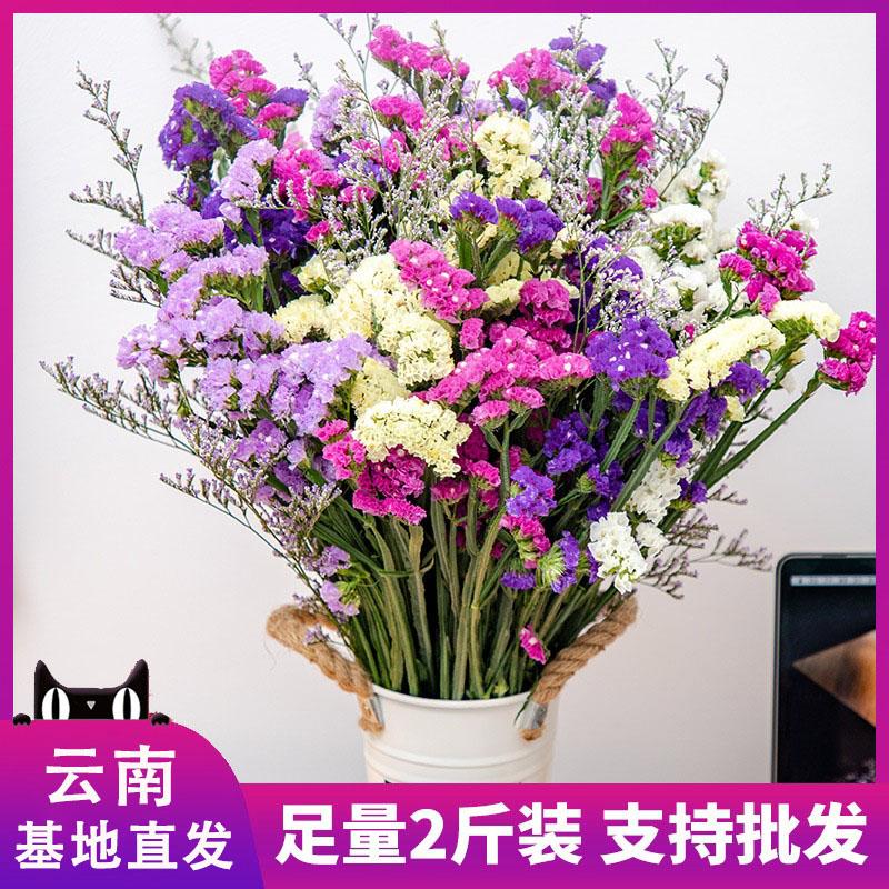 云南风干勿忘我论斤卖干花花束装饰摆件真花鲜花送人礼物插花纪念