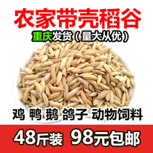 Self determined size of farmhouse rice grain feed chicken, duck, goose, pigeon, bird, hamster, low price grain, grain with shell