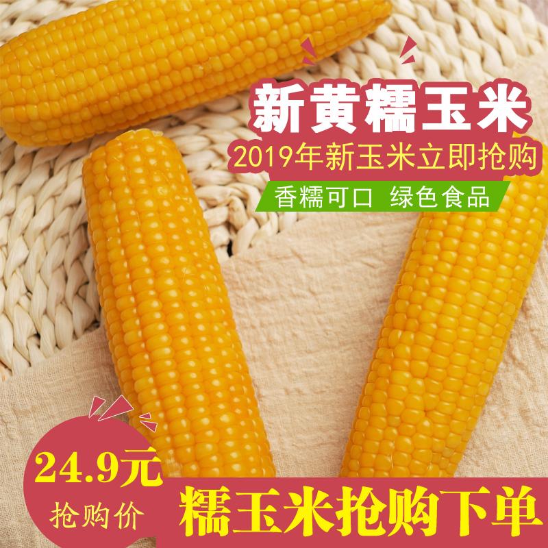 【10根】不甜新黄糯玉米真空东北粘苞米棒黏鲜香非转基因粗粮非白