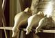 | Цена 677  руб  | Керамические украшения украшения современный ремесла Аксессуары для дома гостиной телевизор Кабинета мебель идеи наборы из трех утка безделушка