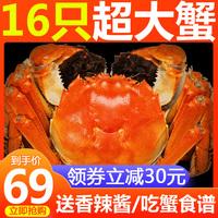 【69元16只】现货六月黄大闸蟹鲜活螃蟹公蟹全母蟹海鲜大蟹礼盒装