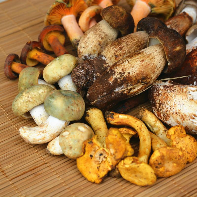 新鲜鸡纵 青头菌 牛肝菌野生菌汤包野生松茸组合鸡油菌菇两斤包邮