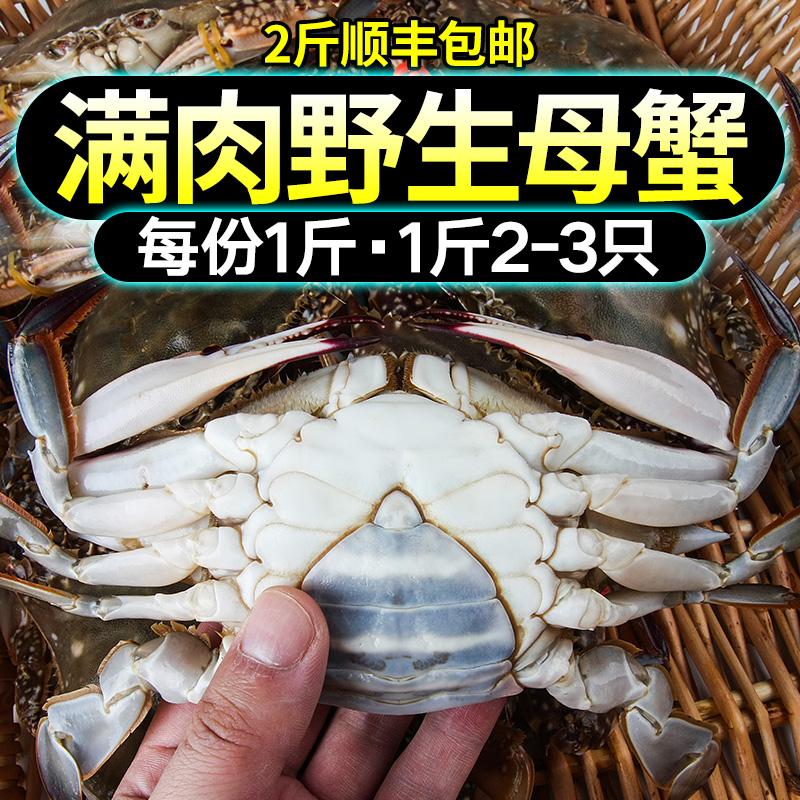 海蟹鲜活免邮 梭子蟹鲜活螃蟹鲜活母大梭子蟹1斤活体新鲜顺丰包邮