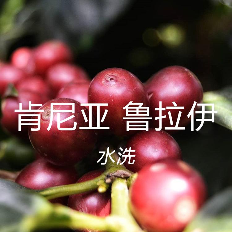 新豆 肯尼亚鲁拉伊AA水洗处理微批次 下单新鲜烘焙精品咖啡豆227g