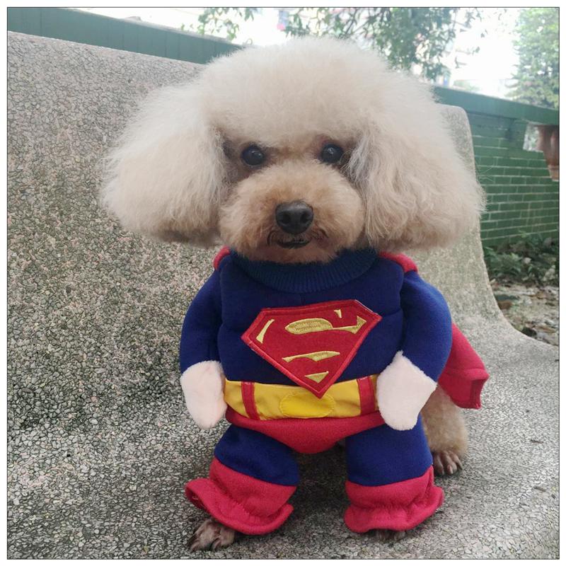 New pet clothing Captain USA Superman standing clothing cat and dog clothing cat and dog three dimensional shirt cape the same