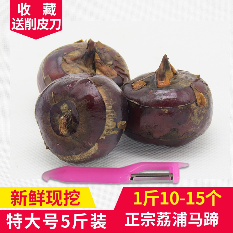 正宗广西荔浦马蹄荸荠 5斤特大号新鲜种子苗乌芋地栗水果农家特产