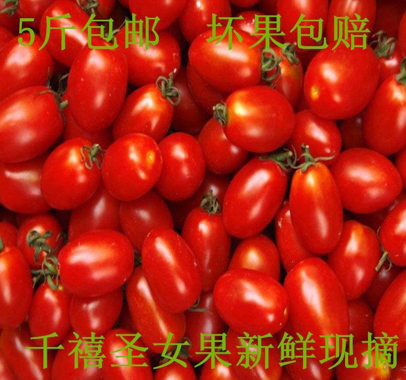 新鲜现摘千禧小番茄圣女果 5斤包邮 水果樱桃小西红柿贝贝小柿子