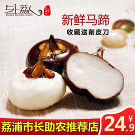 【市长推荐】新鲜马蹄荸荠包邮 荸荠新鲜中大果5斤马蹄之乡荔浦图片