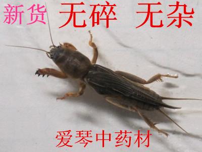 Email маркетинг объемной китайские травы моль сверчков 500 г собак лабрадоров собак Котроль качества