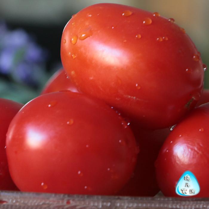农家自种新鲜大番茄 绿色时令蔬菜西红柿自然熟 洋柿子5斤装包邮