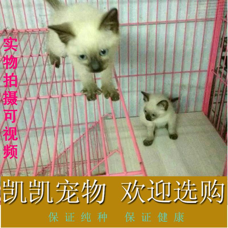 凯凯宠物苑�╋�暹罗小猫咪 可视频�╋�支付宝交易