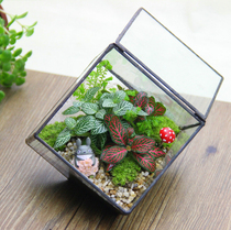 Moss Micro landscape ecological bottle Copper Casting glass Flower House DIY office creative potted plant Decoration